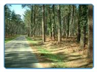 Forest route to the Atlantic coast