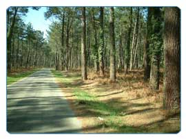 Endless pine forests offer cyclists a refreshing ride